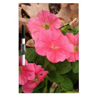 Flores rosadas de la petunia en la floración pizarras blancas