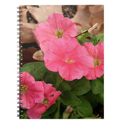 Flores rosadas de la petunia en la floración spiral notebook
