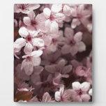 flores rosadas de la primavera placas con fotos