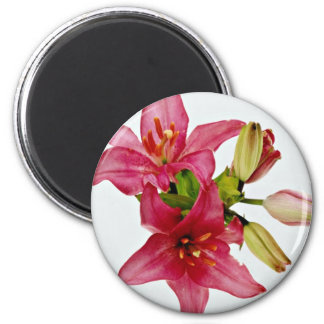 Flores rosadas de las flores imán