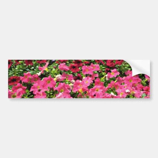 Flores rosadas de las petunias multicoloras pegatina de parachoque