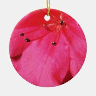 Flores rosadas de los estambres que relucir ornamento para reyes magos