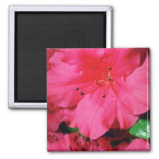 Flores rosadas de los estambres que relucir imanes
