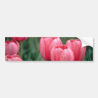 Flores rosadas de los tulipanes pegatina de parachoque