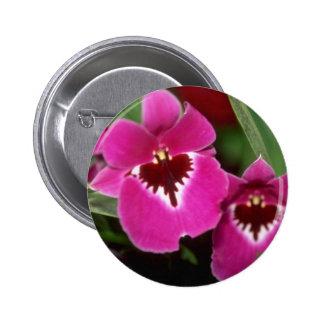 Flores rosadas de Miltoniopsis Pins