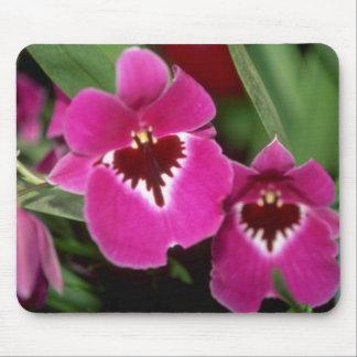 Flores rosadas de Miltoniopsis Tapete De Raton