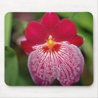 Flores rosadas de Miltoniopsis Tapete De Ratón