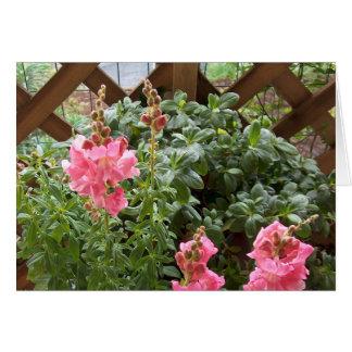 Flores rosadas de Snapdragon Tarjeta De Felicitación