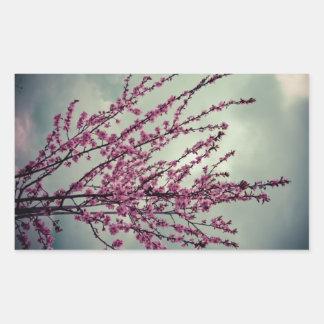 Flores rosadas del árbol