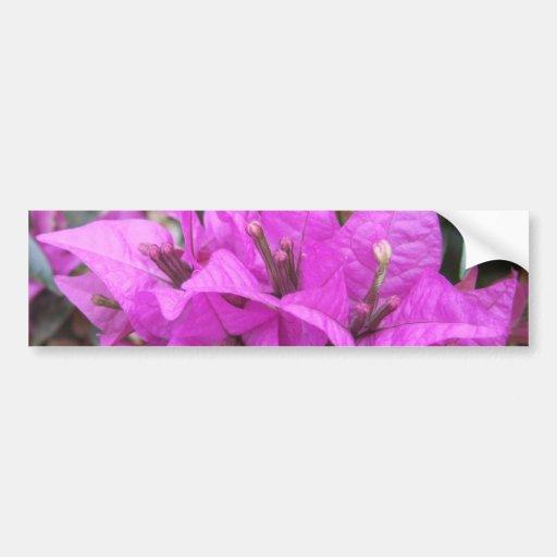 Flores rosadas del Bougainvillea Pegatina Para Auto