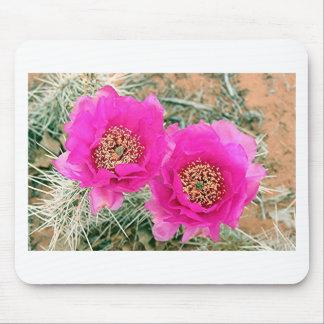 Flores rosadas del cactus en la floración tapetes de ratones