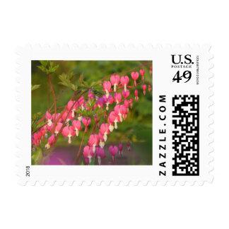 Flores rosadas del corazón sangrante sello postal