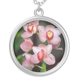 Flores rosadas del Cymbidium Colgantes