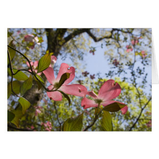 Flores rosadas del Dogwood Tarjeton