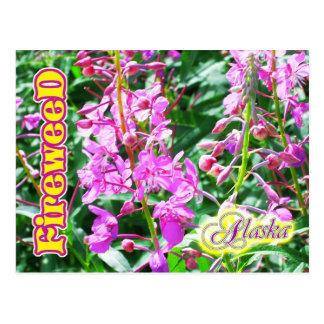 Flores rosadas del Fireweed en Alaska Postales