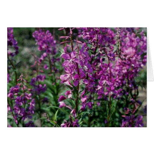Flores rosadas del Fireweed (Epilobium Angustifoli Tarjeta De Felicitación