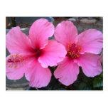 Flores rosadas del hibisco postal
