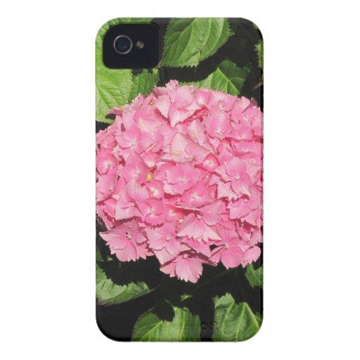 Flores rosadas del Hydrangea iPhone 4 Case-Mate Fundas