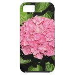 Flores rosadas del Hydrangea iPhone 5 Cárcasas