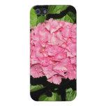 Flores rosadas del Hydrangea iPhone 5 Fundas