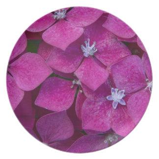 Flores rosadas del Hydrangea Plato