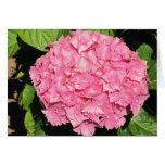 Flores rosadas del Hydrangea Tarjetas