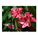 Flores rosadas del lirio tarjetas postales