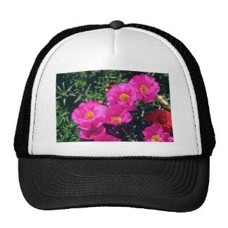 Flores rosadas del musgo color de rosa (Portulaca  Gorro De Camionero
