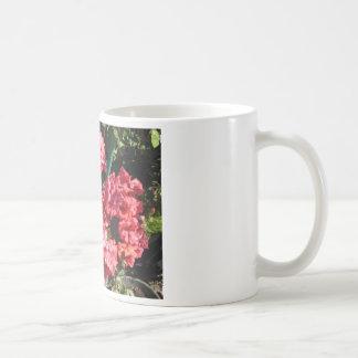 Flores rosadas del Pelargonium Taza