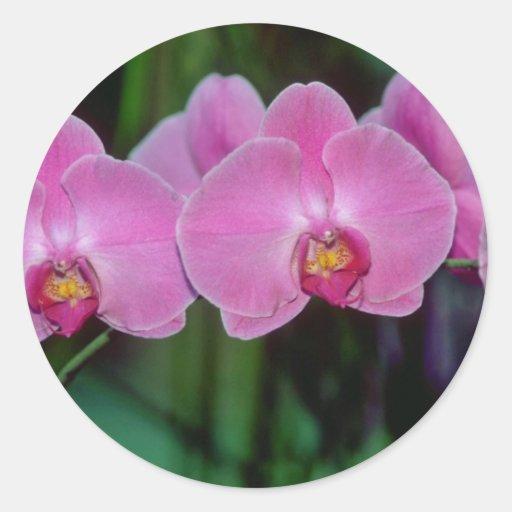Flores rosadas del Phalaenopsis Pegatina Redonda
