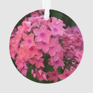 Flores rosadas del Phlox