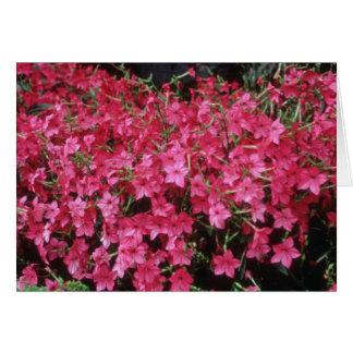 Flores rosadas del tabaco floreciente (nicociana A Tarjeton