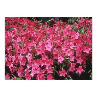 Flores rosadas del tabaco floreciente (nicociana invitación 12,7 x 17,8 cm