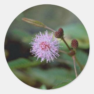 Flores rosadas delicadas del primer de la flor del pegatina redonda