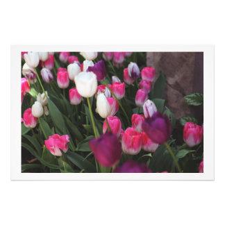 Flores rosadas en primavera cojinete