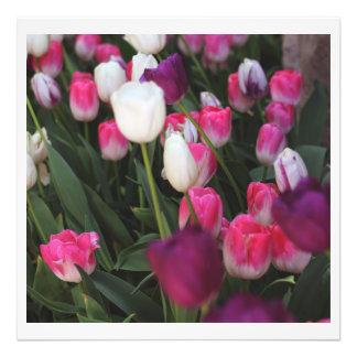 Flores rosadas en primavera fotografía