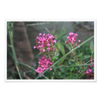 Flores rosadas en un prado fotografía