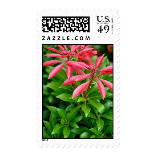 Flores rosadas en verde sellos