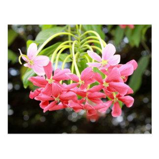 Flores rosadas exóticas postal