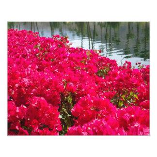 Flores rosadas foto