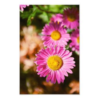 Flores rosadas fotografías