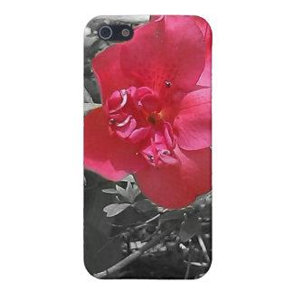 Flores rosadas iPhone 5 coberturas