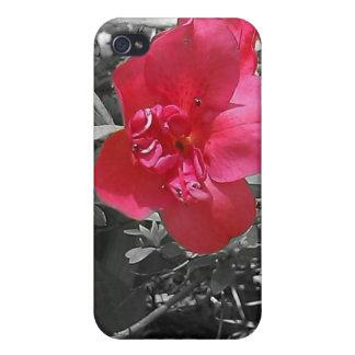 Flores rosadas iPhone 4/4S carcasa