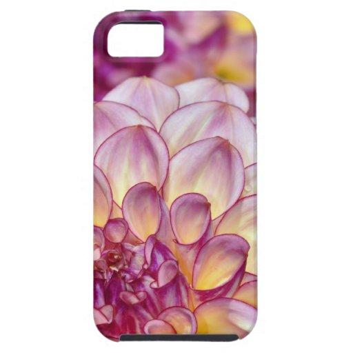 Flores rosadas hermosas de la dalia iPhone 5 coberturas