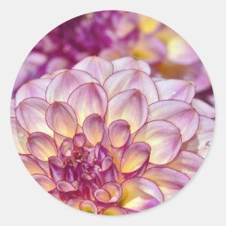 Flores rosadas hermosas de la dalia pegatina redonda