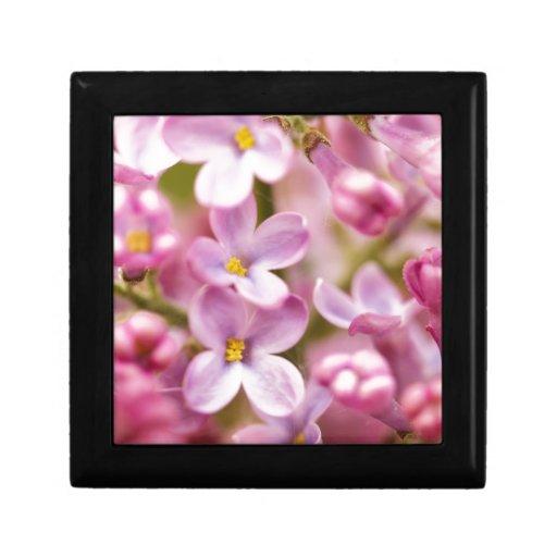Flores rosadas hermosas de la orquídea cajas de recuerdo