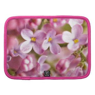 Flores rosadas hermosas de la orquídea organizadores
