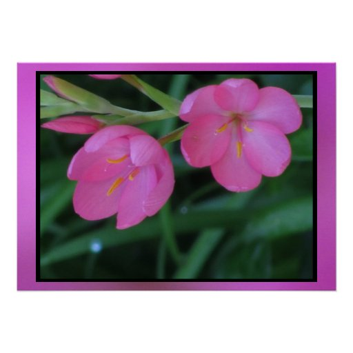 Flores rosadas impresiones