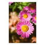 Flores rosadas impresiones fotograficas