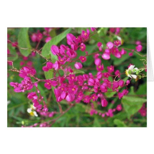 Flores rosadas oscuras minúsculas felicitaciones